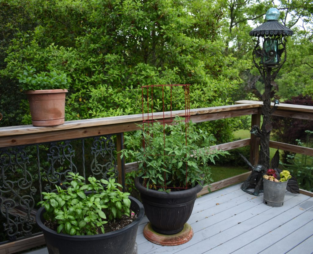 Fresh herbs growing on the back porch www.diningwithmimi.com